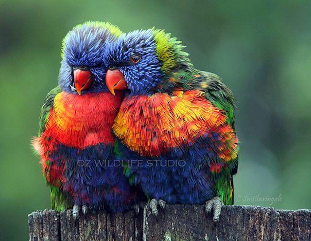 kuşlar nasıl uyur