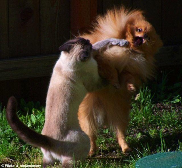 İlginç hayvan fotoğrafları İlginç İlginç Bilgiler  ilginç bilgiler