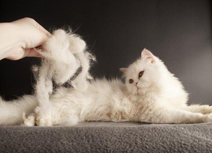 Kedilerde tüy bakımı nasıl yapılır ? Haber  kedilerde