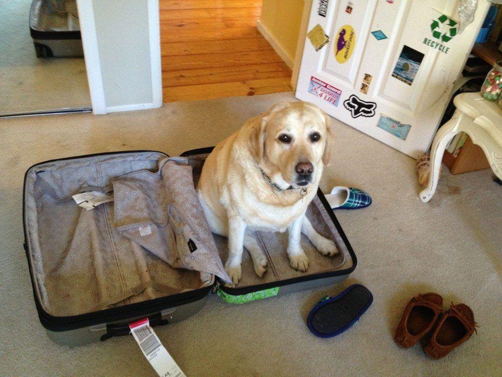 Kedi ve köpekler neden bavul sever Komik  kedi ve köpekler