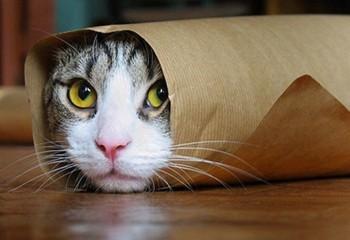 Kedilerde tüy bakımı nasıl yapılır ?