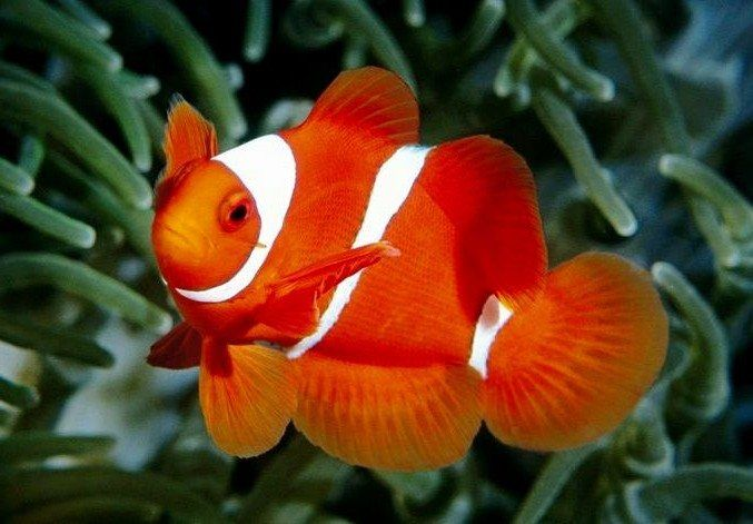 Balıkların duyguları var mı?