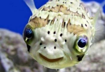 Balıkların duyguları var mıdır?