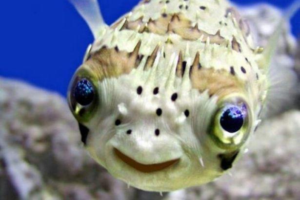 Balıkların duyguları var mıdır? İlginç  duygular
