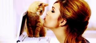 Kedi mırıltısı faydaları