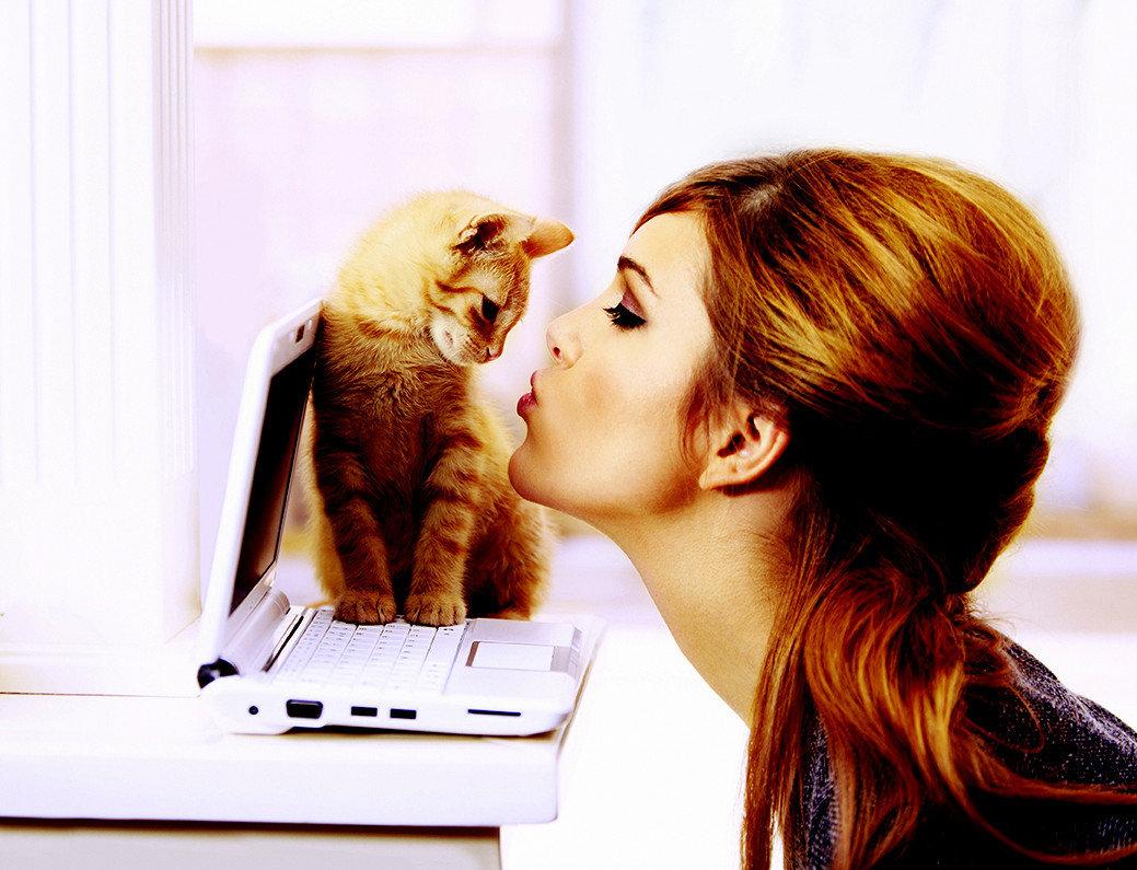 Kedi mırıltısı faydaları Haber  faydalar