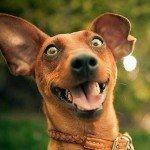 Komik köpek videolarını seviyorsanız kaçırmayın!