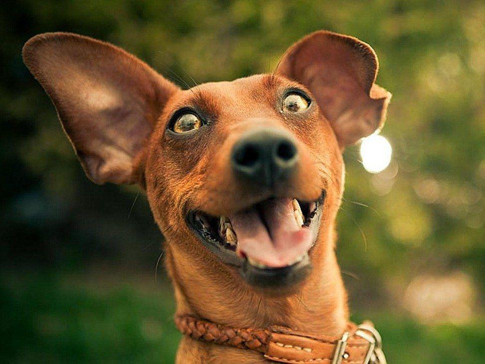 Bu Köpek Videolarına Çok Güleceksiniz... Sosyal Medya  videolar kopek guleceksiniz