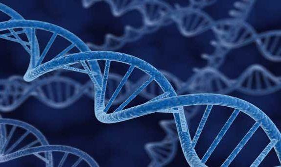 Hücre nedir ? Hücrenin temel kısımları İlginç Bilgiler  temel nedir hucrenin hucre