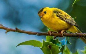 Kuşların Ötüşü İlginç Bilgiler