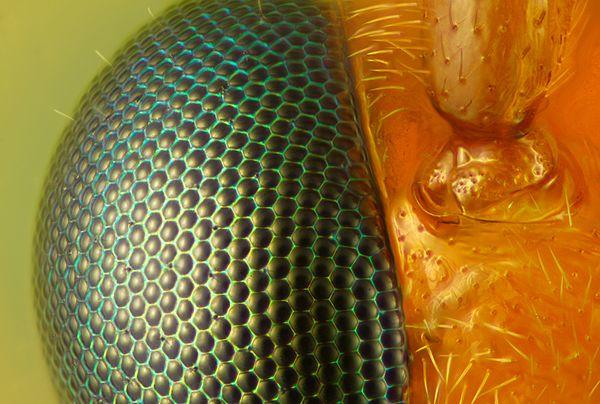 Arılar hakkında ilginç bilgiler İlginç Bilgiler  ilgin bilgiler