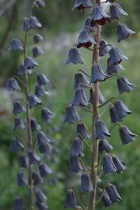 Bitkilerde Büyüme ve Gelişme İlginç Bilgiler  buyume bitkilerde
