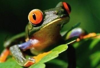 Kurbağalar hakkında ilginç bilgiler
