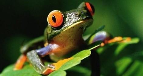 Kurbağalar hakkında ilginç bilgiler İlginç Bilgiler  kurba ilgin bilgiler