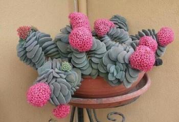İlginç bitkiler ve çiçekler