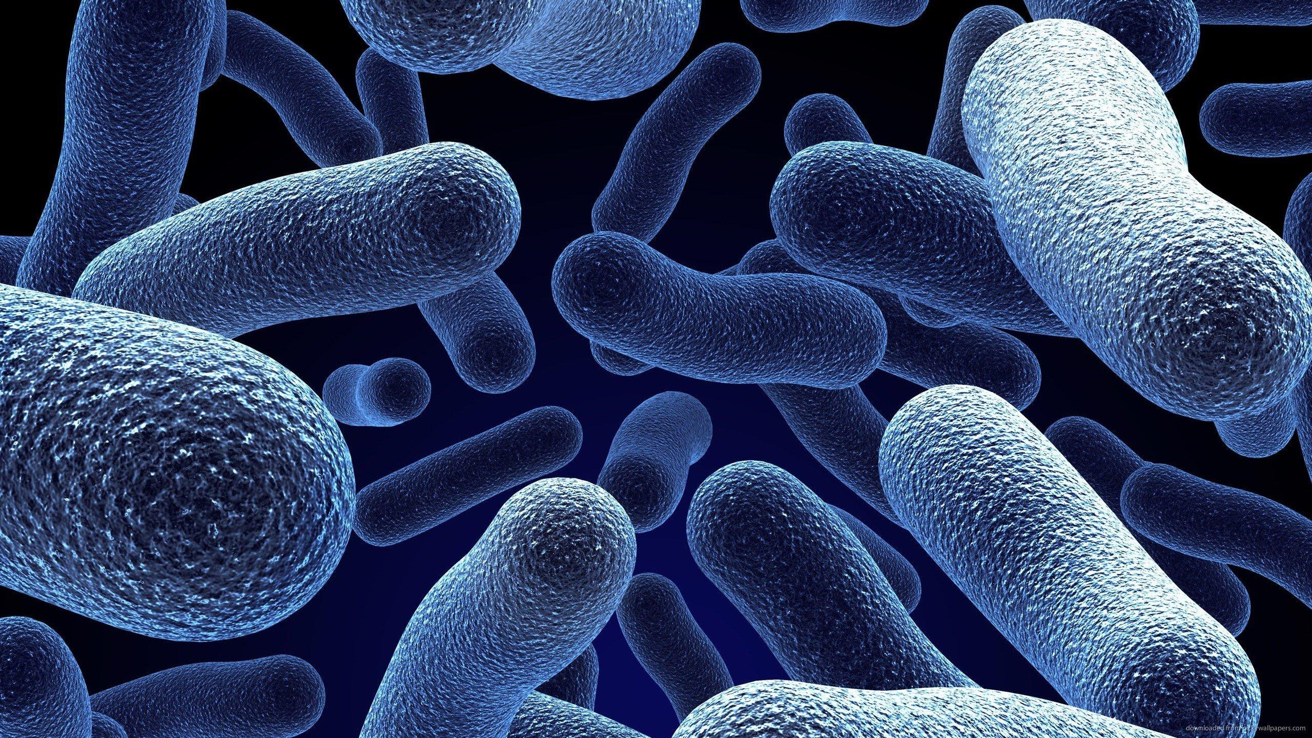 Bakteriler ne işe yarar ? İlginç Bilgiler  yarar bakteriler